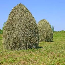 Fodder Stack of Hay